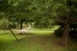 amenities Hammock