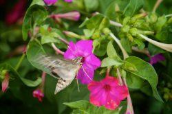 photos moth