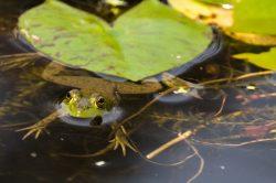 wildlife frogpond