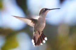 wildlife hummer closeup