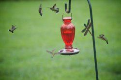 wildlife hummers