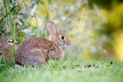 wildlife rabbit